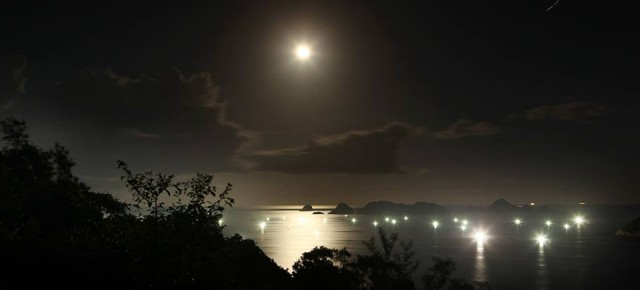Moon Dappling a Night Garden