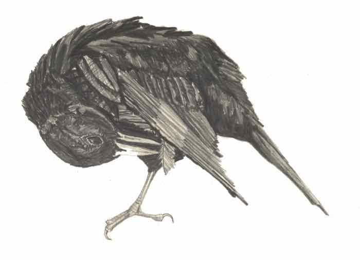 lyr1 bird 1