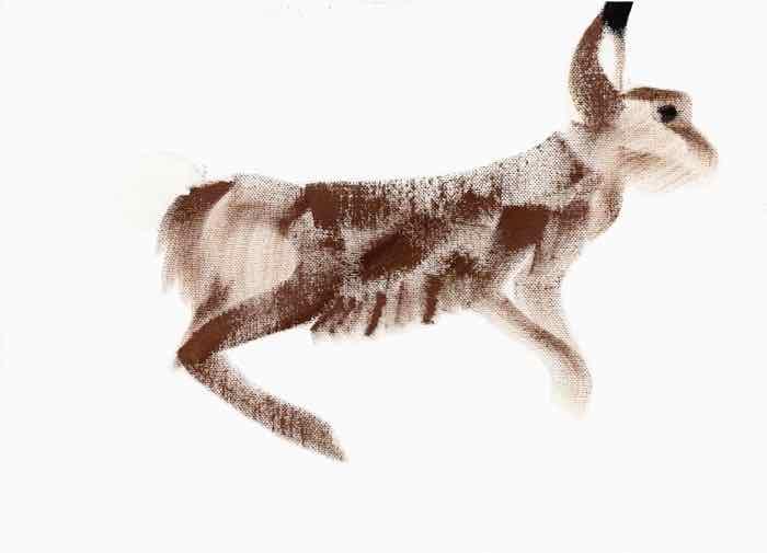 lyr6 hare
