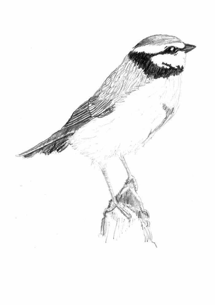 lyr9 bird 2